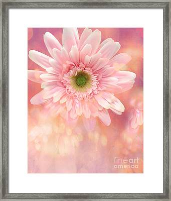 Dreamy Cottage Shabby Chic Pink Yellow Mango Gerber Daisy Flowers  Framed Print by Kathy Fornal