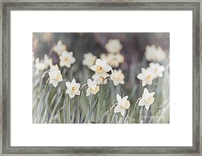 Dreamy Daffodils Framed Print by Elena Elisseeva