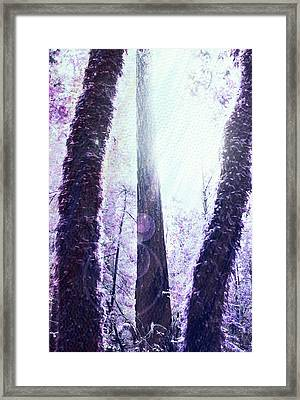 Dreamy Forest Framed Print by Nicole Swanger