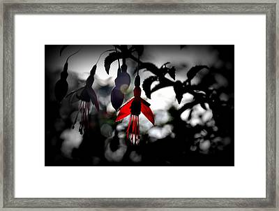 Dreamy Fuchsia Framed Print by Florian Walsh