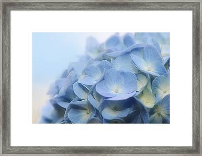 Dreamy Hydrangea Framed Print by Lisa Knechtel