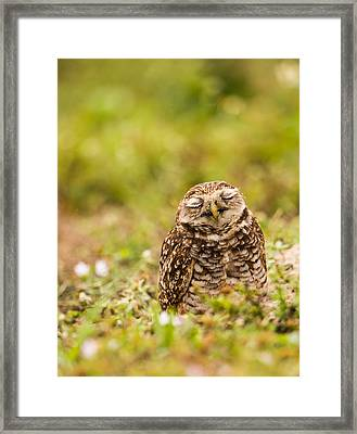 Dreamy Owl Framed Print by Andres Leon