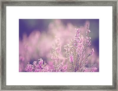 Dreamy Pink Heather Framed Print by Natalie Kinnear