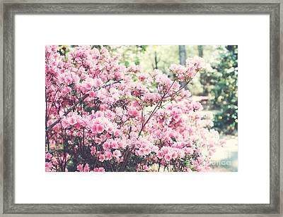 Dreamy Pink South Carolina Apple Blossom Trees - South Carolina Vintage Pastel Pink Blossoms Tree Framed Print by Kathy Fornal