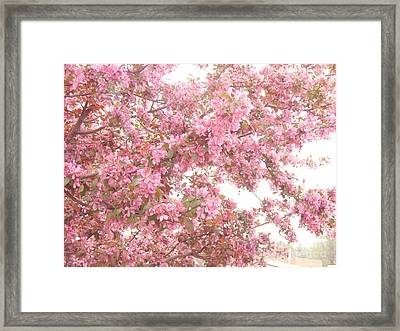 Dreamy Pink South Carolina Spring Apple Blossom Trees Framed Print by Kathy Fornal