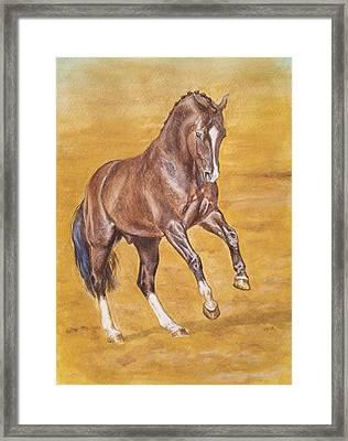 Dressage Stallion -bay Horse Framed Print by Dorota Zdunska