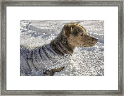 Dressed For The Snow Framed Print by Jason Politte