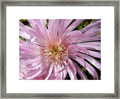 Dressed In Pink Framed Print by Leana De Villiers