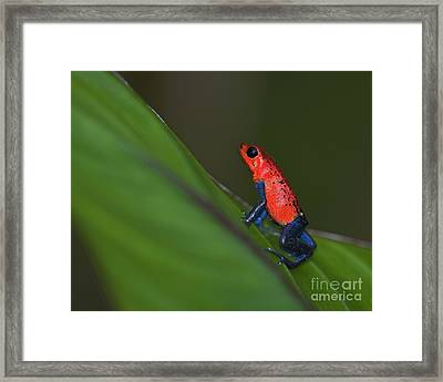 Dressed To Kill.. Framed Print by Nina Stavlund