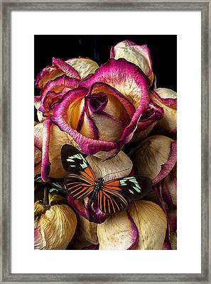 Dried Rose And Butterfly Framed Print by Garry Gay