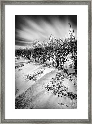 Drifting Framed Print by John Farnan