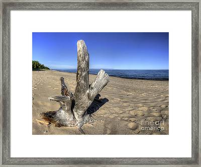 Driftwood At Pictured Rocks Framed Print by Twenty Two North Photography
