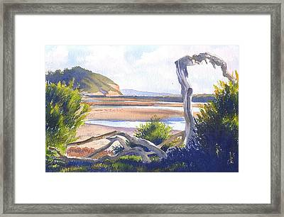 Driftwood At Torrey Pines Framed Print by Mary Helmreich