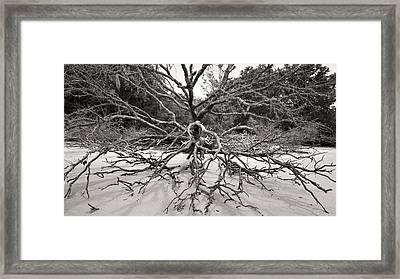 Driftwood Framed Print by Barbara Kraus - Northrup