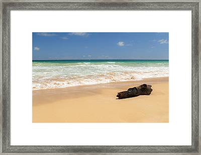 Driftwood Framed Print by Brian Harig
