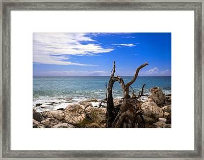 Driftwood Island Framed Print by Karen Wiles