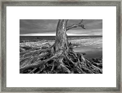 Driftwood On Jekyll Island Black And White Framed Print by Debra and Dave Vanderlaan
