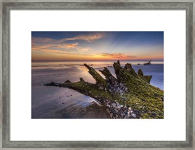 Driftwood On The Beach Framed Print by Debra and Dave Vanderlaan