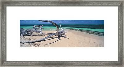 Driftwood On The Beach, Green Island Framed Print by Panoramic Images