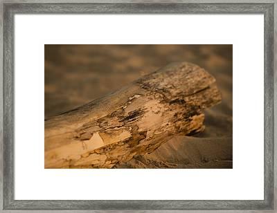 Driftwood Framed Print by Sebastian Musial
