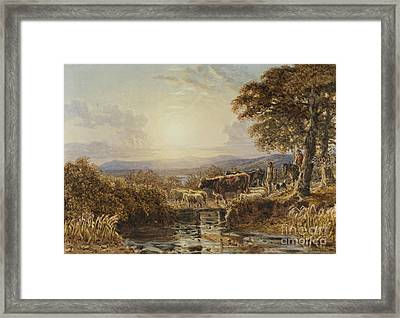 Driving Cattle At Eventide Framed Print by Celestial Images