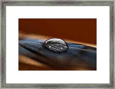 Drop On A Bluejay Feather Framed Print by Susan Capuano