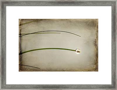 Drop Framed Print by Svetlana Sewell