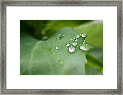 Droplets On Green Framed Print by Melissa Smith