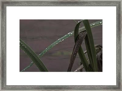 Drops Framed Print by Leif Sohlman