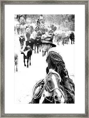 Drover At Work Framed Print by Fred Lassmann
