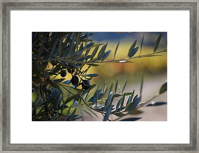 Dry Creek Valley Olives Framed Print by Smiling In Sonoma