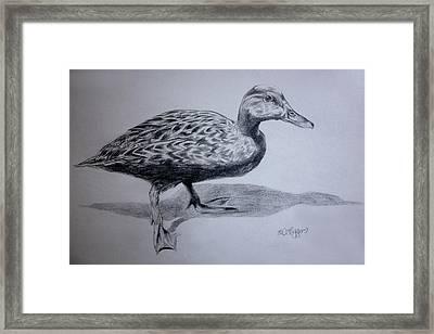 Duck Framed Print by Derrick Higgins
