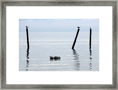 Duck Drifters Framed Print by Barry Goble
