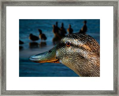 Duck Watching Ducks Framed Print by Bob Orsillo