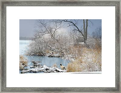 Ducks By The Pond Framed Print by Mary Timman