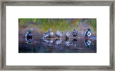 Ducks In A Row Framed Print by Larry Marshall