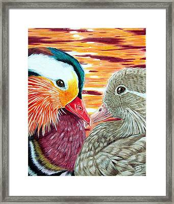 Ducks In Love Framed Print by Shannon Clements