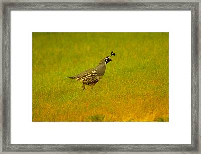 Dude Dont Shoot Me Framed Print by Jeff Swan