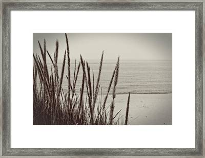 Dune Grass In Early Spring Framed Print by Michelle Calkins