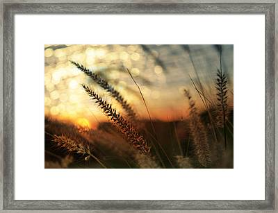 Dune Framed Print by Laura Fasulo
