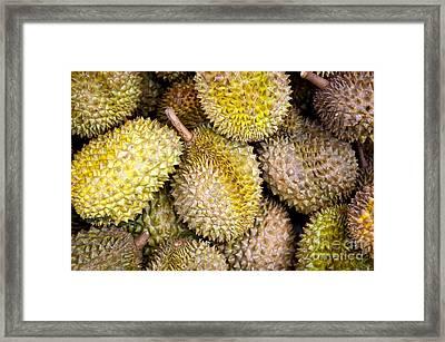 Durian Fruit Framed Print by Tim Hester