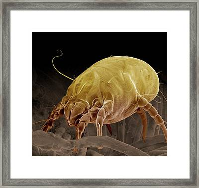 Dust Mite Framed Print by Clouds Hill Imaging Ltd