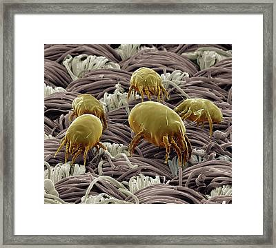 Dust Mites On Fabric Framed Print by Clouds Hill Imaging Ltd