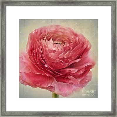 Dusty Pink Framed Print by Priska Wettstein