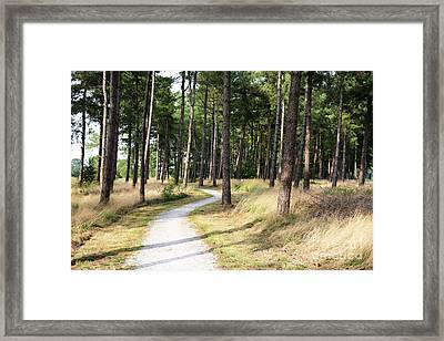 Dutch Country Bicycle Path Framed Print by Carol Groenen