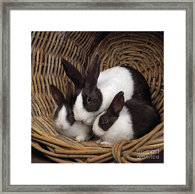 Dutch Rabbit With Young Framed Print by E A Janes