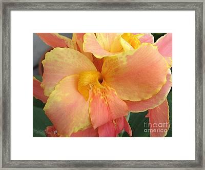 Dwarf Canna Lily Named Corsica Framed Print by J McCombie