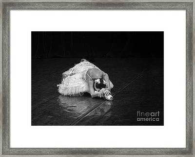 Dying Swan 4. Framed Print by Clare Bambers