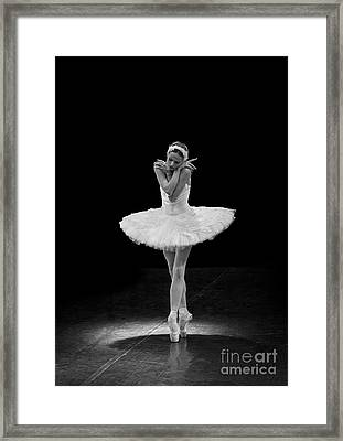 Dying Swan 5. Framed Print by Clare Bambers