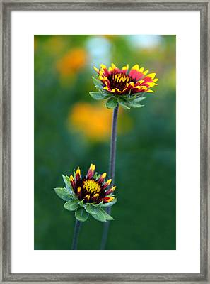 Dynamic Duo Framed Print by Jessica Jenney